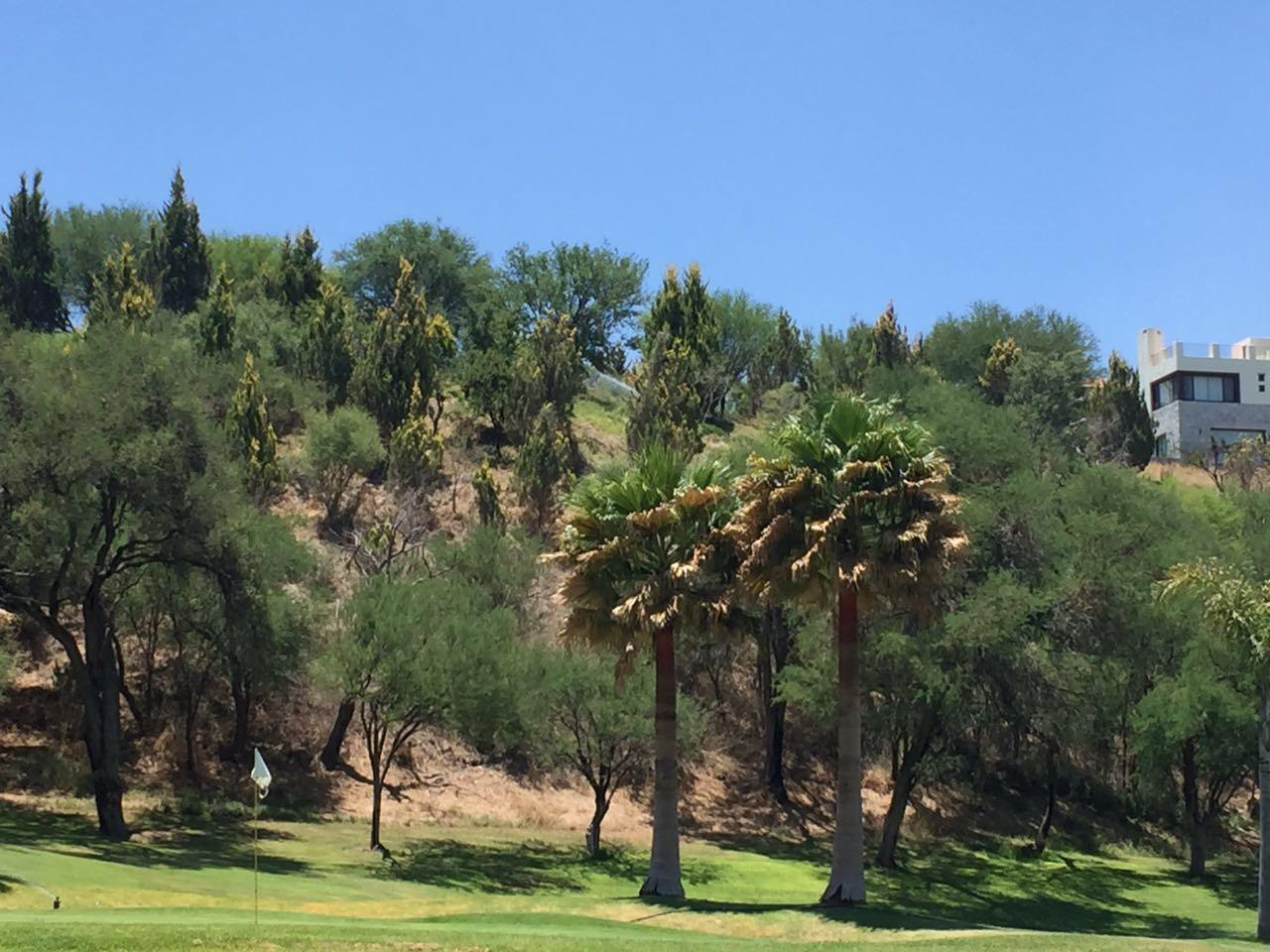 Eden Los Sabinos arboles y palmeras